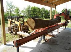 20-ft Green Ash Log